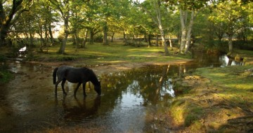 Camping holidays for single parents with kids   single parent holidays   New Forest Camping