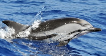Dolphins on holiday